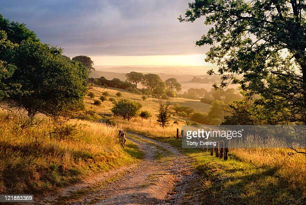 dawn sunshine in english countryside. - england stock pictures, royalty-free photos & images