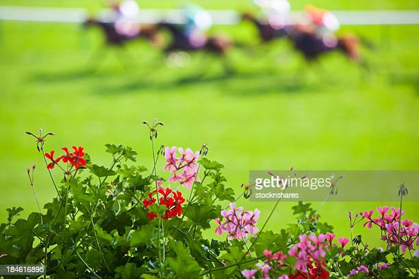 day at the races - horse racing stock pictures, royalty-free photos & images