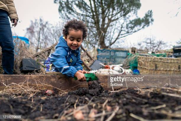 a day in the allotment - exploration stock pictures, royalty-free photos & images