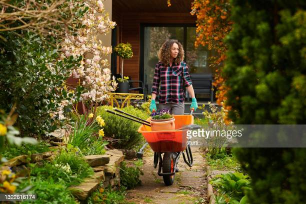 day in the garden - one mid adult woman only stock pictures, royalty-free photos & images