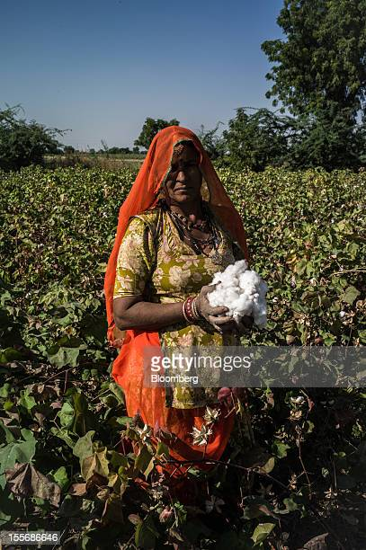 A day laborer holding harvested cotton stands for a photograph on a farm in Umaid Nagar Rajasthan India on Monday Oct 29 2012 Cotton shipments from...
