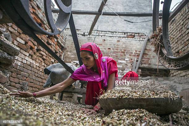 Day laborer Kamlesh works at her home in Lahli village Haryana India on Tuesday Nov 3 2015 After years of volunteering for a union in northern India...