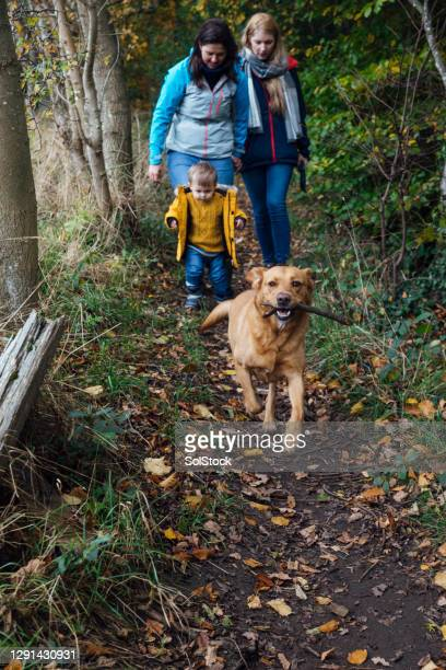 day out with the dog - babyhood stock pictures, royalty-free photos & images
