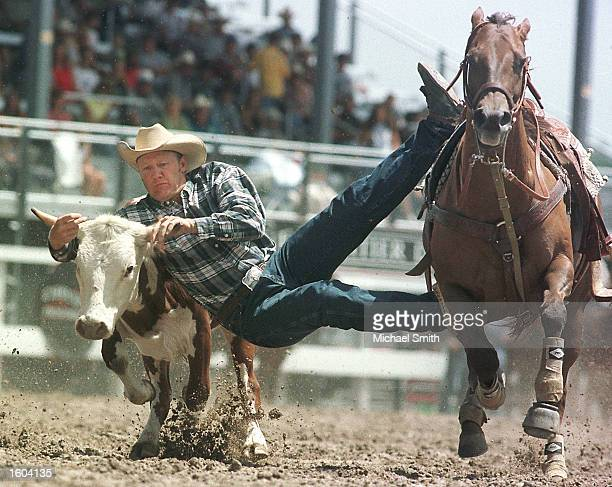 Dayne Eaton grabs on to a steer during the first round of competition at the Cheyenne Frontier Days Rodeo July 24 2001 in Cheyenne WY The steer...