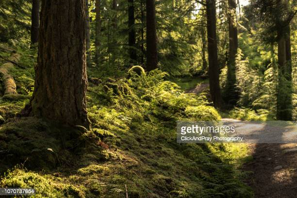 days end - forest stock pictures, royalty-free photos & images