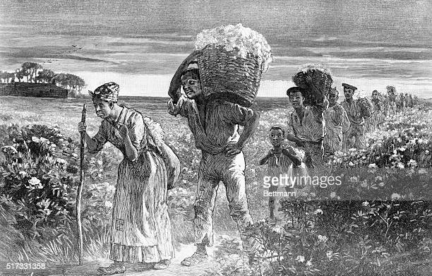 A Day's Work Ended Black slaves leaving the fields with baskets of cotton Engraving from a drawing by Matt Morgan