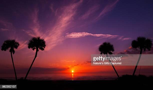 Daytona Palm Tree Sunsrise