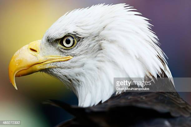 De Hertog or The Duke the eagle mascot of Vitesse Arnhem is pictured prior to the UEFA Europa League third qualifying Round 2nd Leg match between...