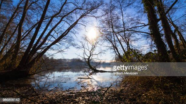 de wittsee - william mevissen stock pictures, royalty-free photos & images
