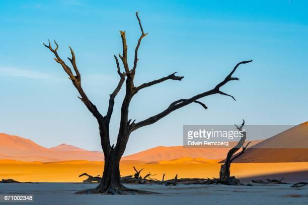 Dead acacia tree at Dune 45
