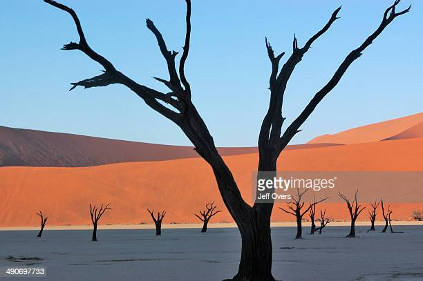 Dead acacia trees stand in the area called the Dead Vlei in Sossusvlei in the NamibNaukluft National Park in Namibia A vlei is a salt encrusted dry...