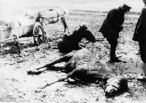 Dead and dying horses near a Belgorod collective farm during the manmade Holodomor famine in the Ukraine former Soviet Union 1934
