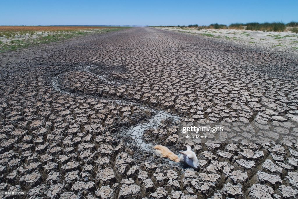 Animals Struggle To Escape From The Dry Bed of Lake Cawndilla : Nachrichtenfoto