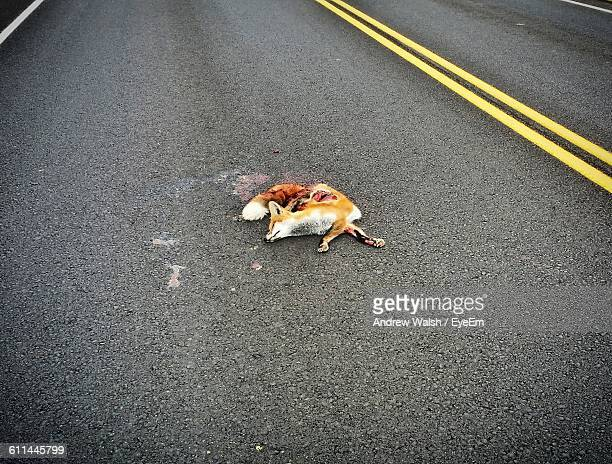 dead animal on the road - roadkill stock photos and pictures