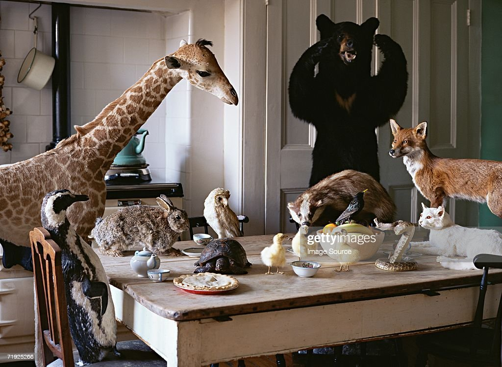 Dead animals at the kitchen table : Stock Photo