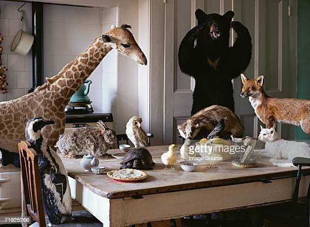 Dead animals at the kitchen table