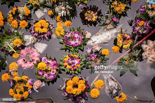 Dead animals float alongside krathongs in Chiang Mai's moat one day after the Loy Kratong Festival. Every year, about 600 tons of Krathong are...