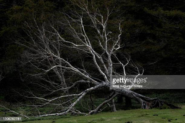 dead, bare tree laying on ground - bare tree stock pictures, royalty-free photos & images