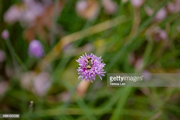 Dead bee on flower
