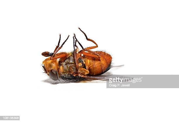 dead bee - insect stock pictures, royalty-free photos & images