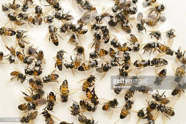 dead bees colony collapse disorder - large group of animals stock pictures, royalty-free photos & images