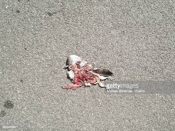 dead bird on road - roadkill stock photos and pictures