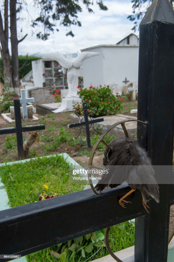 A dead bird put into a cross of a grave at the Cayambe