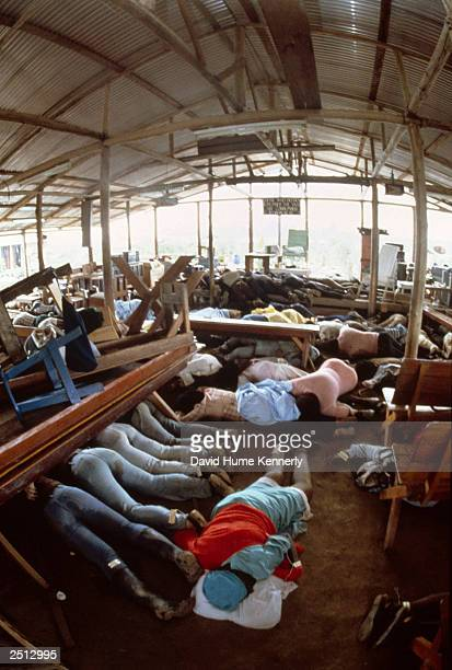 Dead bodies lie in the compound of the People's Temple cult November 18 1978 in Jonestown Guyana after over 900 members of the cult led by Reverend...