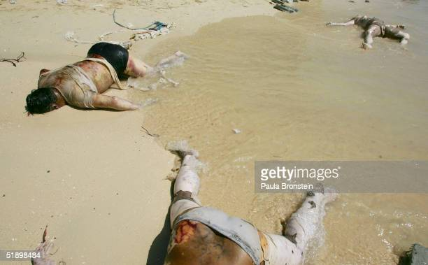 Dead Bodies litter the beach on December 28 2004 on Phi Phi Island Thailand Hundreds were killed when an earthquake caused a Tsunami wave destroying...