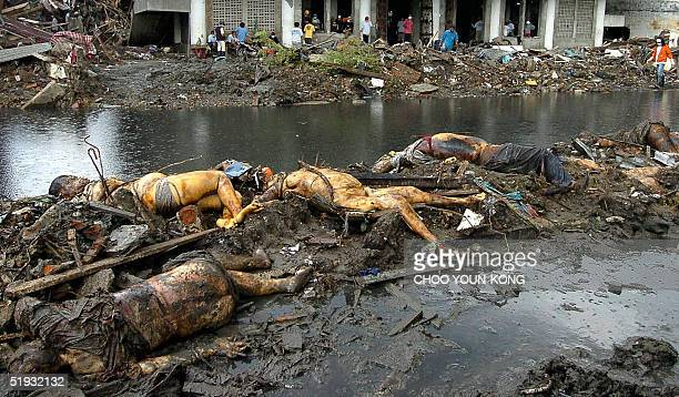 Dead bodies litter the landscape outside a local mosque as student volunteers from Muhammadiyah University help with the clean up process over two...