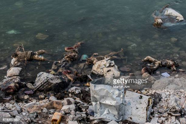 Dead bodies of presumed Islamic State fighters killed by Iraqi forces in the water on the bank of the Tigris River on July 22, 2017 in Mosul, Iraq....