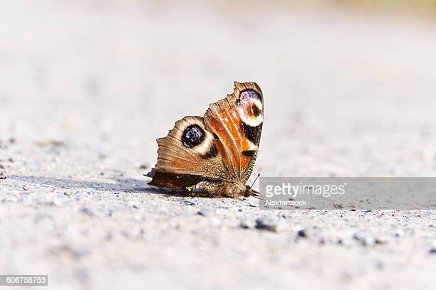 Dead Butterfly On Field