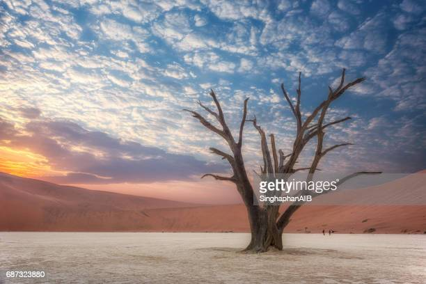 Dead camel thorn trees with bluesky and sunshine background in Deadvlei at Sossusvlei National Park in Namibia