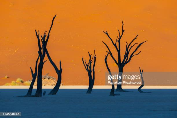 dead camelthorn trees and red dunes in deadvlei, sossusvlei, namib-naukluft national park, namibia - dead vlei namibia stock pictures, royalty-free photos & images