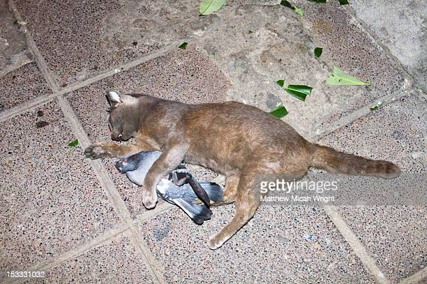 A dead cat and bird holding each other.
