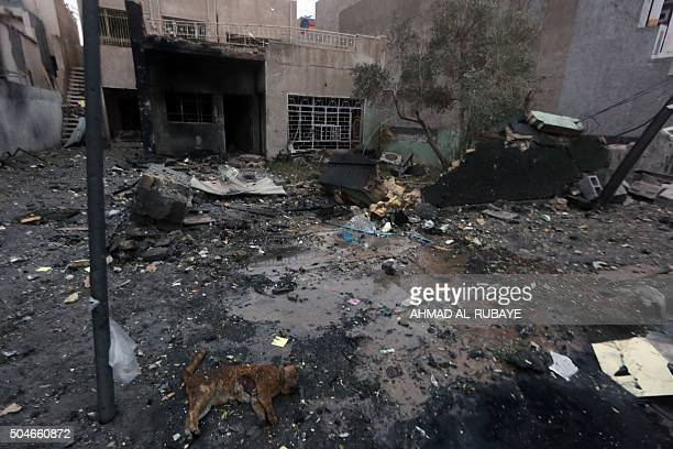 A dead cat is seen on the floor in the rubble in eastern Baghdad the day after a bomb attack on January 12 2016 Jihadist gunmen and bombers killed at...