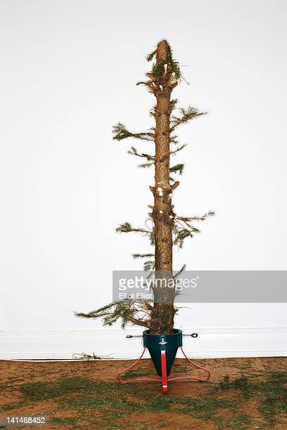 dead christmas tree - dead plant stock pictures, royalty-free photos & images