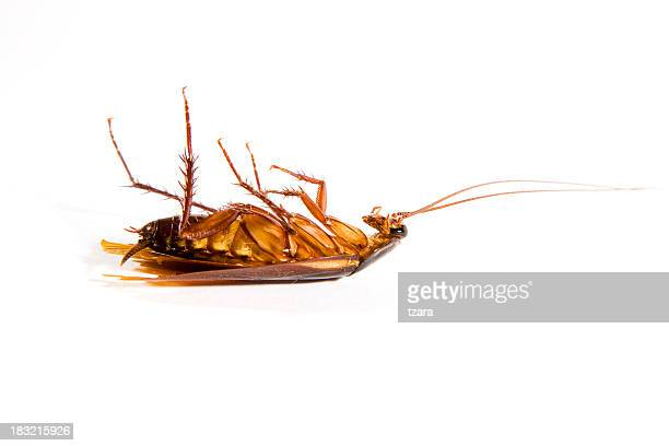 dead cockroach - pest stock photos and pictures