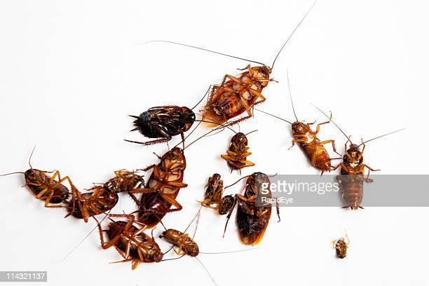 dead cockroaches - cockroach stock photos and pictures