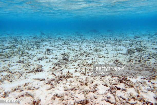 Dead coral lies on the seabed off the island of Huraa on December 12, 2019 near Male, Maldives. Some parts of the Maldives are believed to have lost...