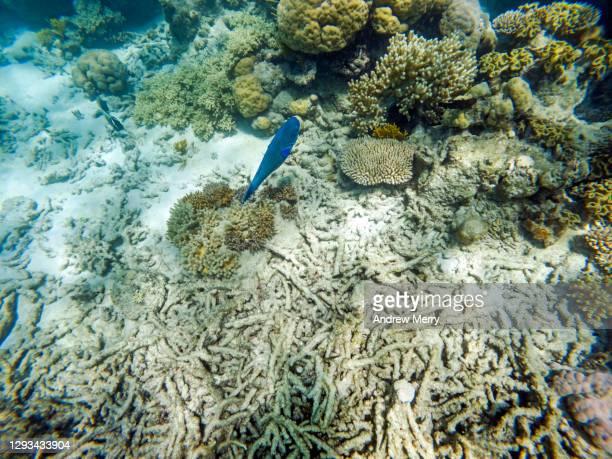 dead coral rubble, underwater, great barrier reef - スクーバダイビングの視点 ストックフォトと画像