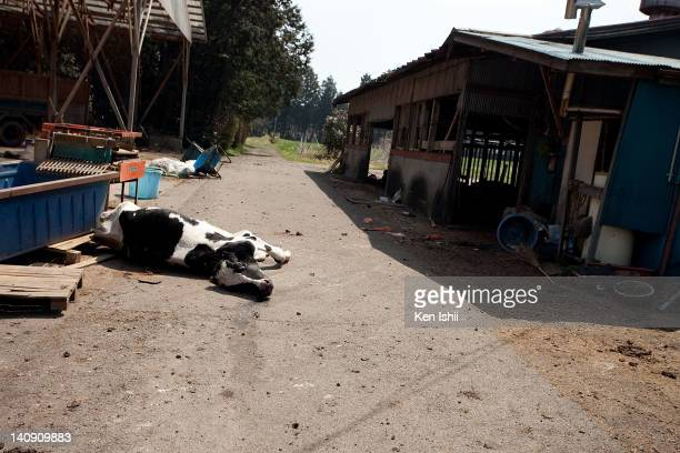 dead cow farm