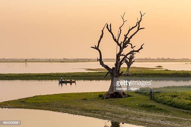 dead curly trees along lake - merten snijders stock pictures, royalty-free photos & images