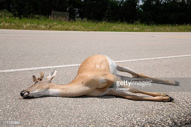 dead deer by side of road - dead stock pictures, royalty-free photos & images