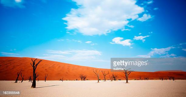 dead desert trees - namib naukluft national park stock pictures, royalty-free photos & images