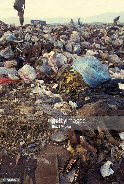 Dead dog carcass in dump pickers sort through garbage finding recyclables as a means of survival at Metropolitan Landfill of Jardim Gramacho in Duque...