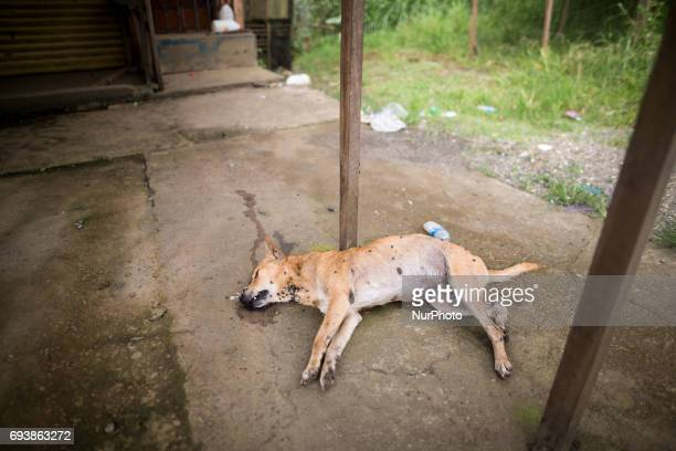 A dead dog in front of a abandoned house is seen on the third week after an attack of Maute group in Marawi City Lanao del Sur Southern Philippines...
