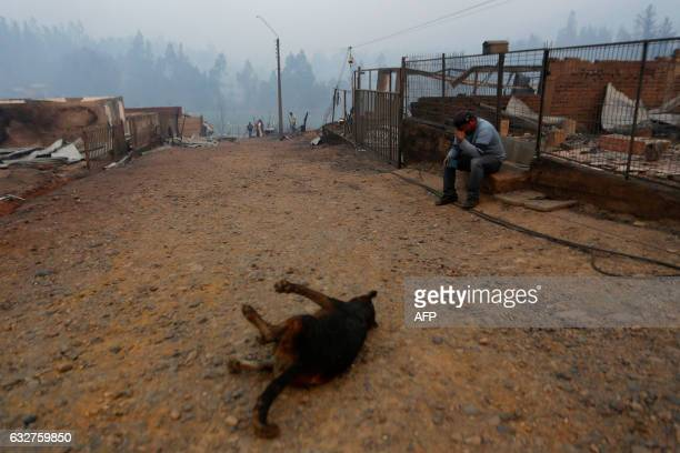 TOPSHOT A dead dog lies in a path next to a crying man after a forest fire devastated Santa Olga 240 kilometres south of Santiago on January 26 2017...