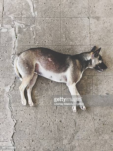 dead dog lying on street - dead dog stock pictures, royalty-free photos & images