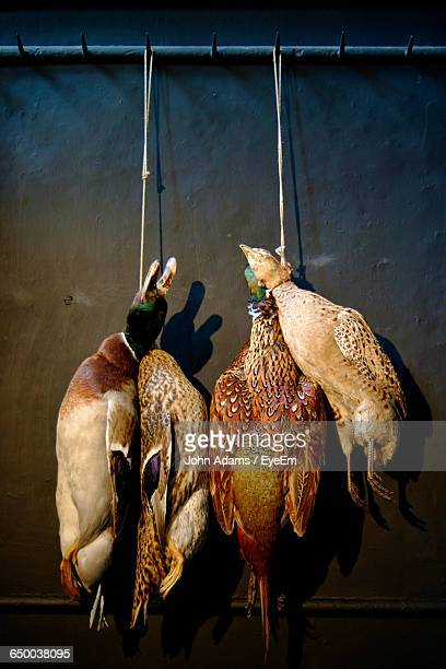 Dead Ducks And Pheasant Hanging Against Wall